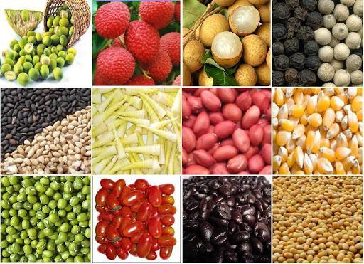 mặt hàng xuất khẩu nông sản