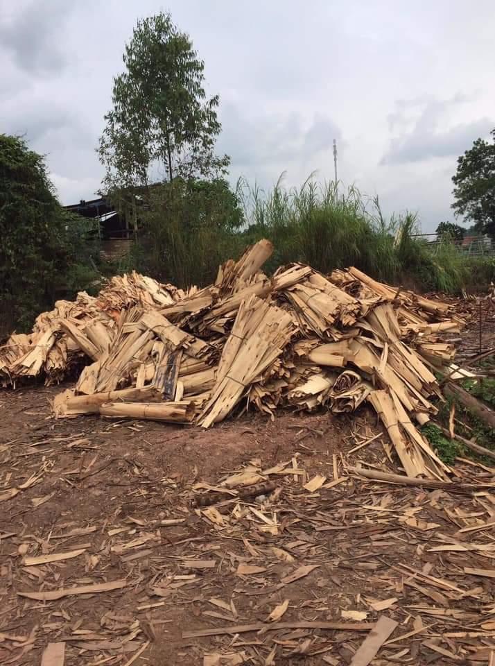 Rác ván bóc làm nguyên liệu cho sản xuất viên nén